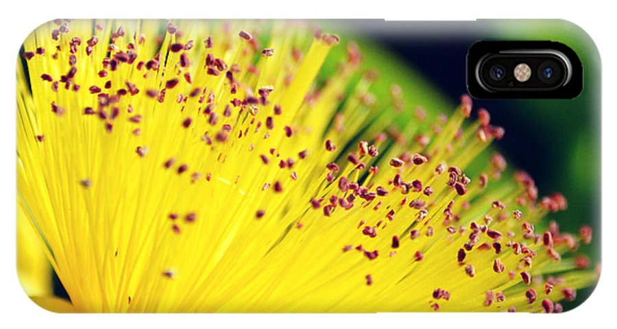 Flower IPhone X Case featuring the photograph Bursting by Robin Dickinson