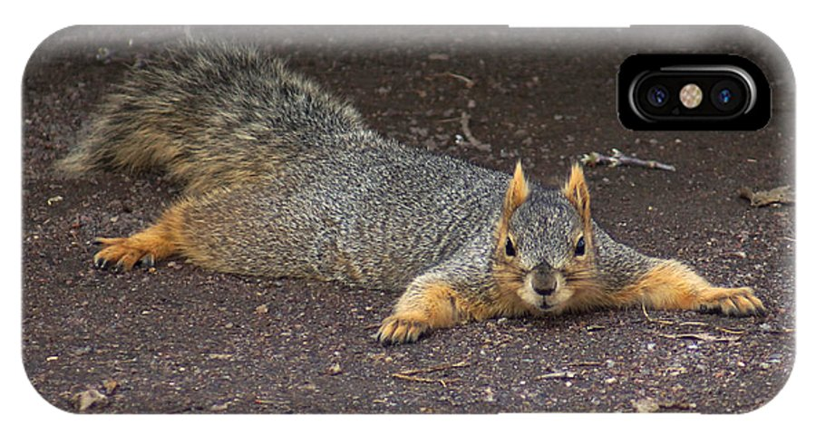 Squirrel IPhone X Case featuring the photograph Busted by Lori Tordsen
