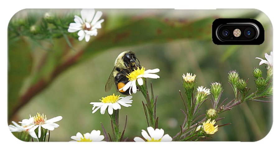 Bee IPhone X / XS Case featuring the photograph Busy Bee by Barbara McDevitt