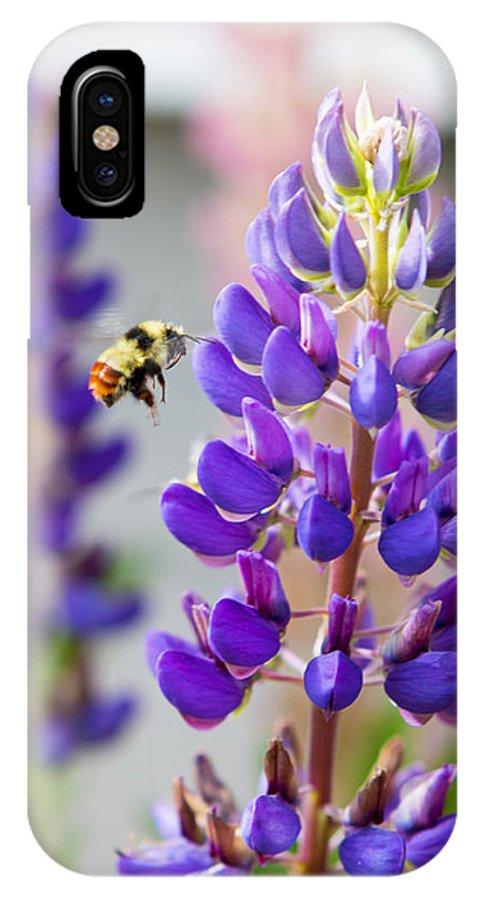 Purple Lupine Bumble Bee IPhone X Case featuring the photograph Busy Bumble Bee by Jill Courtney