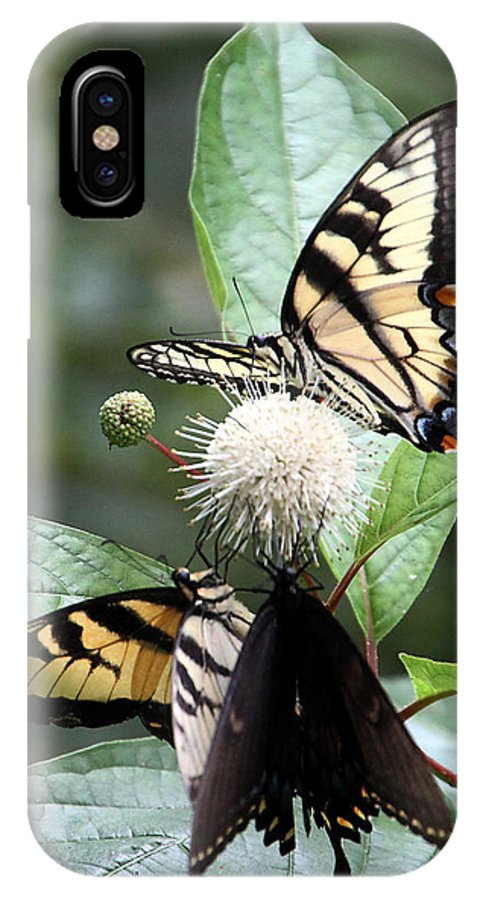 Butterflies IPhone X Case featuring the photograph Butterflies Lunch Date by Rhonda Burger