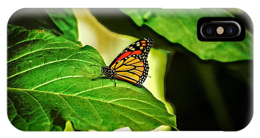 Butterfly IPhone X Case featuring the photograph Butterfly 4 by Rich Priest