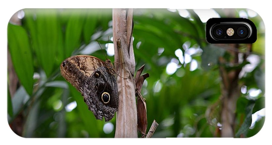 Butterfly IPhone X Case featuring the photograph Butterfly by Chandra Wesson