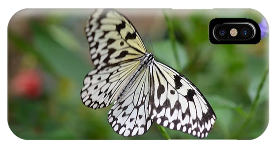 Butterfly IPhone X Case featuring the photograph Butterfly Charm by Chandra Wesson