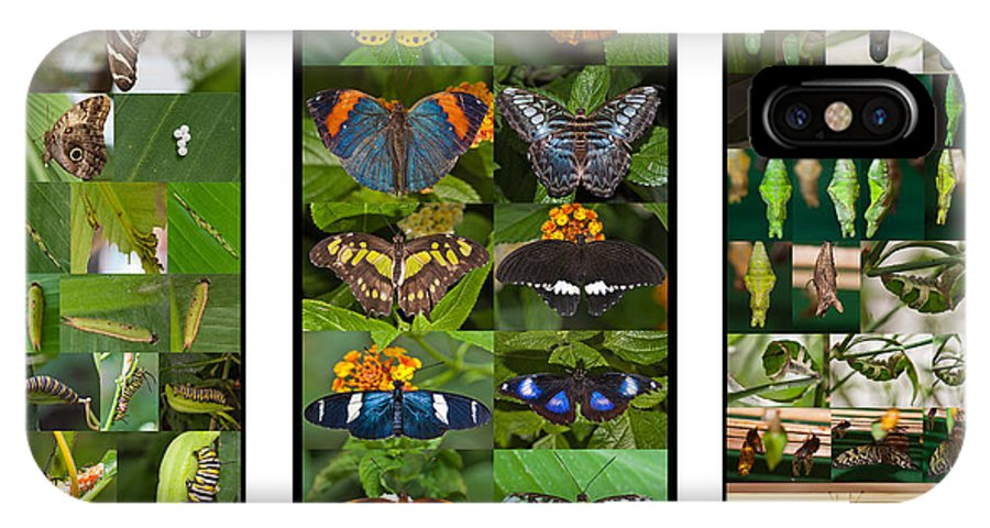 Butterflies IPhone X Case featuring the photograph Butterfly Cycle by Maj Seda