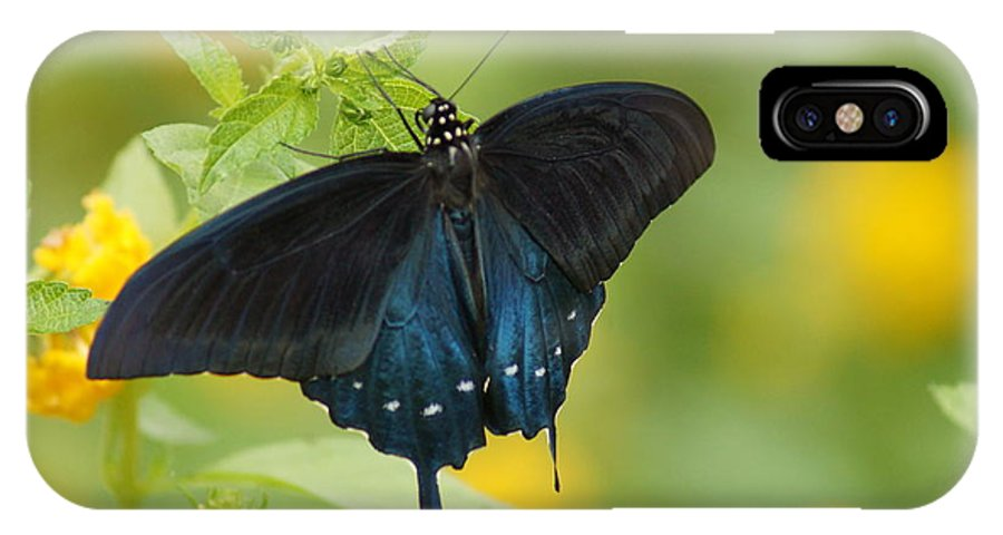 Butterfly IPhone X Case featuring the photograph Butterfly by Darla Abernathy