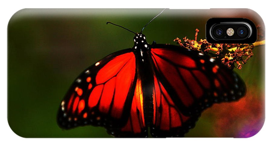 Butterfly IPhone X Case featuring the photograph Butterfly by Dave Smith