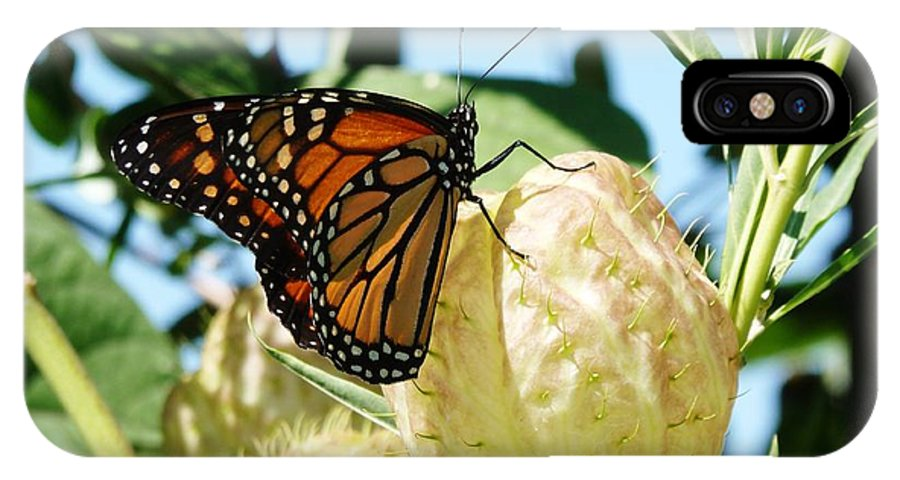 Butterfly IPhone X Case featuring the photograph Butterfly by Jennifer Wartsky