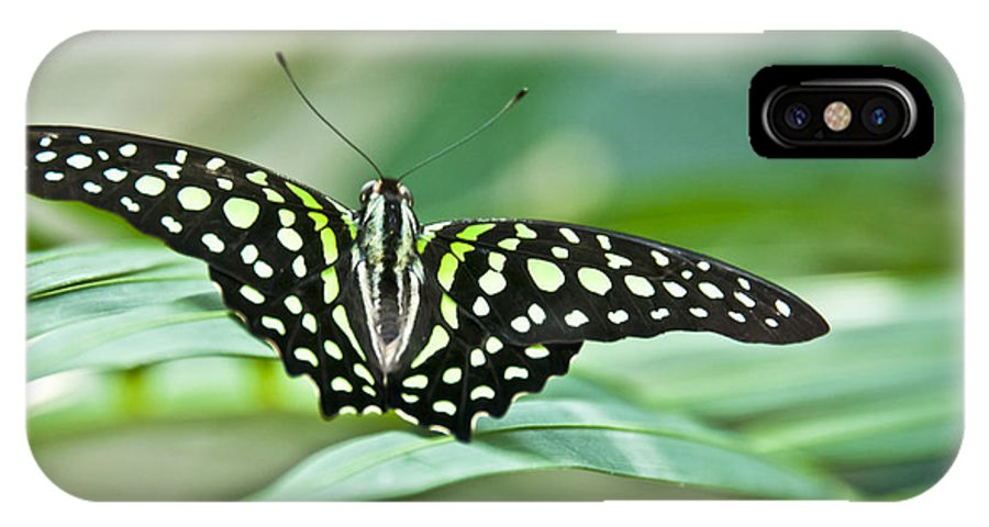 Butterfly IPhone X Case featuring the photograph Butterfly Resting Color by Ron White