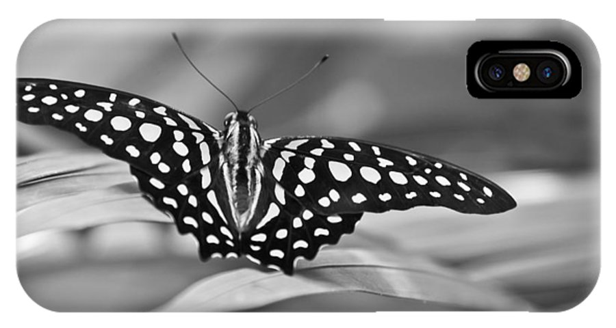 Butterfly Black & White IPhone X Case featuring the photograph Butterfly Resting by Ron White