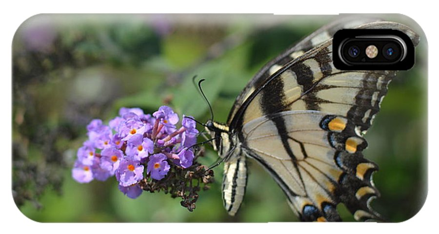 IPhone X Case featuring the photograph Butterfly by Robert Loe