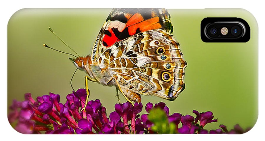Butterfly IPhone X Case featuring the photograph Butterfly by Warrena J Barnerd
