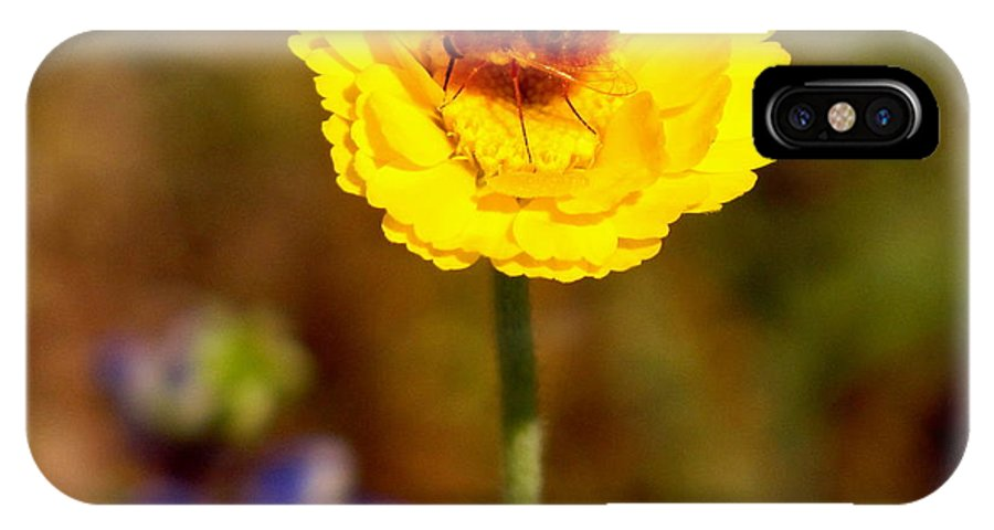 Bee IPhone X Case featuring the photograph Buzzin' by Marilyn Smith