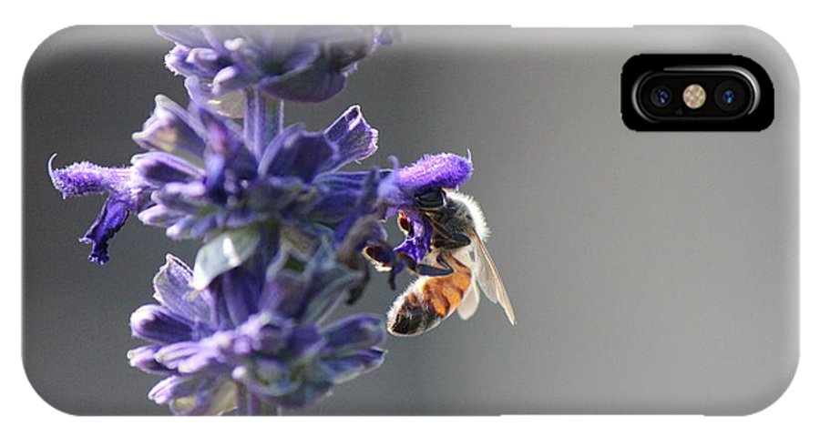 Insect IPhone X Case featuring the photograph Bzzzzzzzzz by Peggy Burley