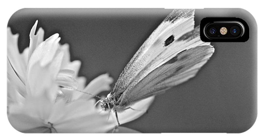 Butterfly IPhone X Case featuring the photograph Cabbage White Butterfly On Cosmos - Black And White by Mother Nature