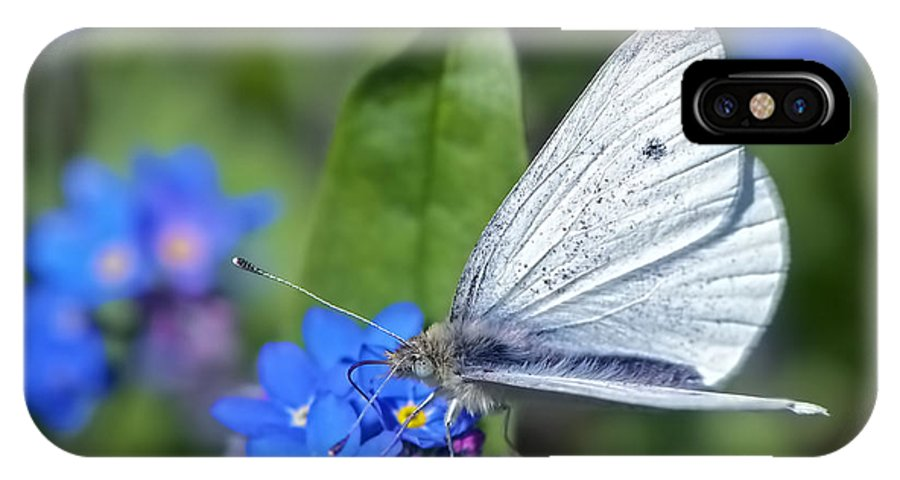 Cabbage White Butterfly IPhone X Case featuring the photograph Cabbage White Butterfly On Forget-me-not by Sharon Talson
