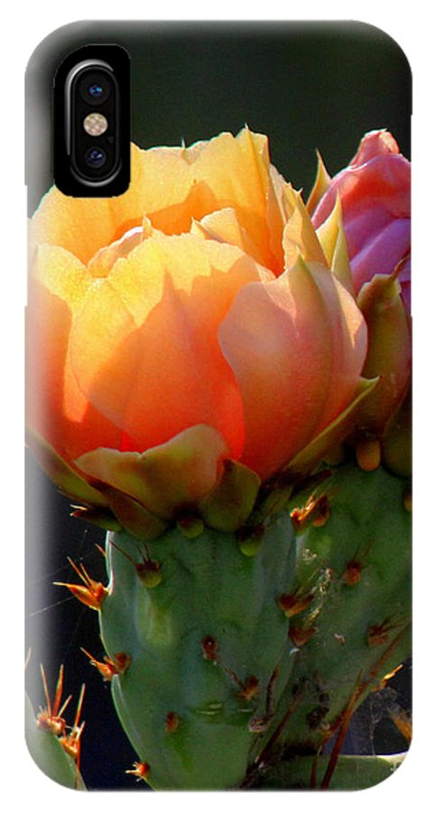 Cactus IPhone X Case featuring the photograph Cactus Blossom by C Ray Roth