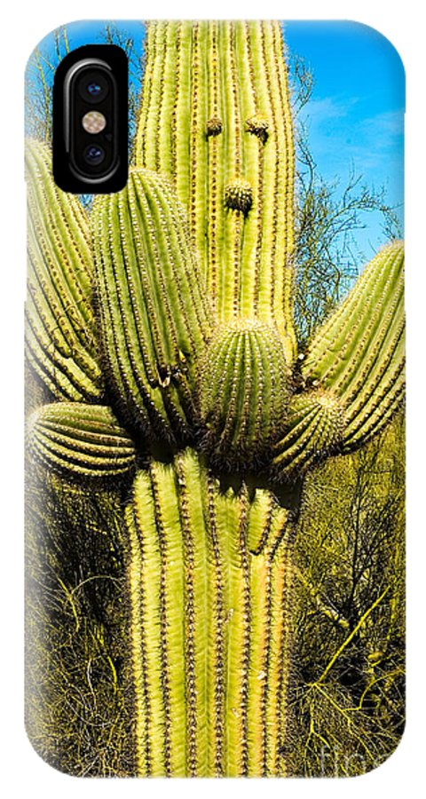 Saguaro Cactus Grew A Face IPhone X Case featuring the photograph Cactus Face by Mae Wertz
