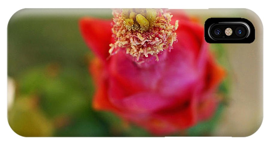 Cactus IPhone X Case featuring the photograph Cactus In Bloom by Carmen Del Valle