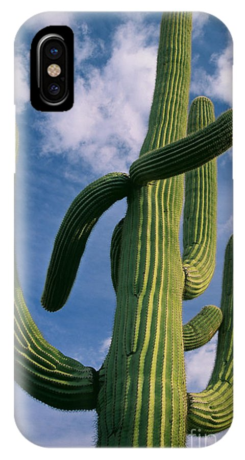 America IPhone X Case featuring the photograph Cactus In The Clouds by Inge Johnsson