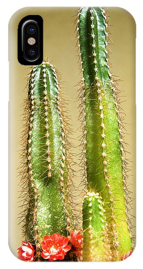 Cactus IPhone X Case featuring the photograph Cactus Towers by Carlos Vieira