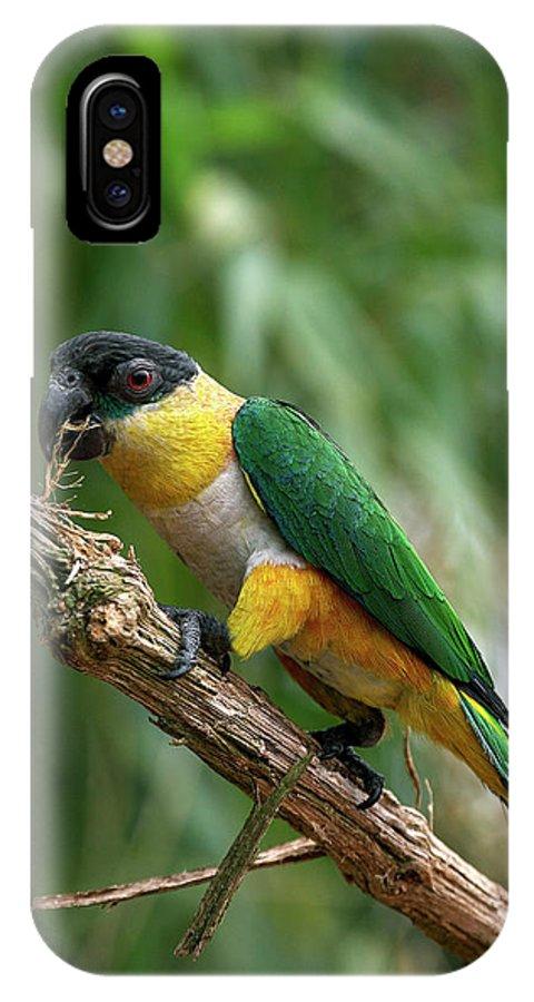 Adult IPhone X Case featuring the photograph Caique A Tete Noire Pionites by Gerard Lacz