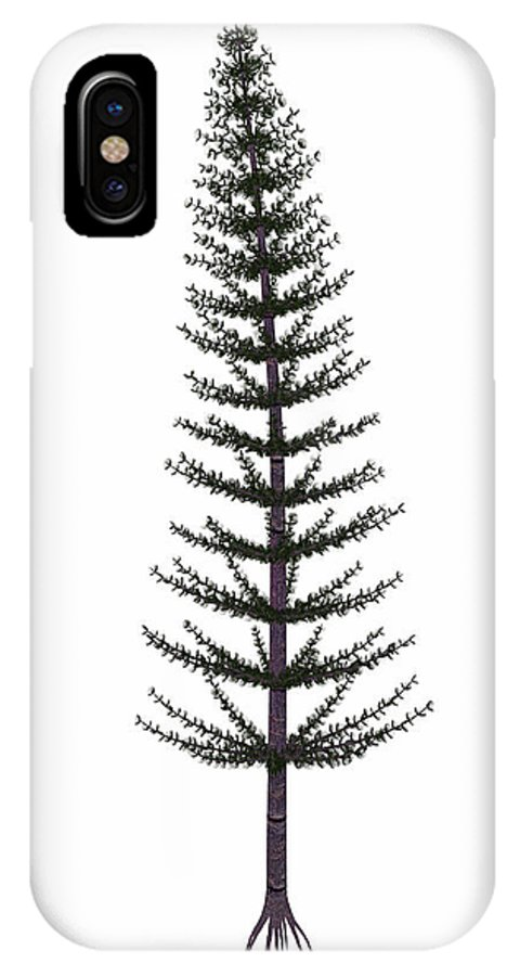 Calamites IPhone X Case featuring the photograph Calamites Prehistoric Tree by Elena Duvernay