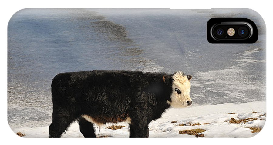 Animal IPhone X Case featuring the photograph Calf by Grisha Grigorov