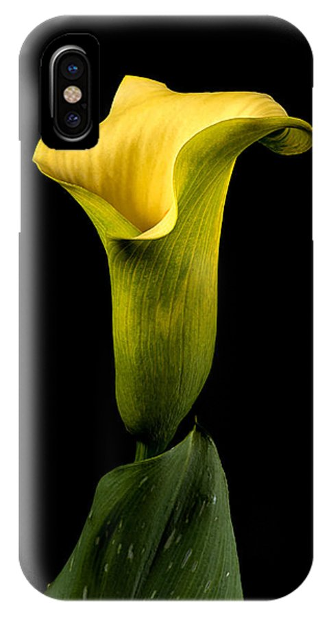 Yellow Callia IPhone X Case featuring the photograph Calia Lilly by Boyd E Van der Laan