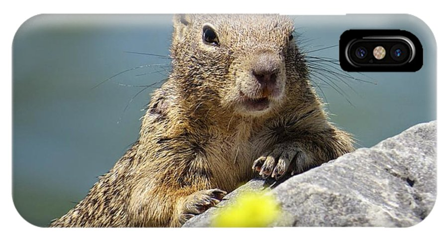 California Ground Squirrel IPhone X Case featuring the photograph California Ground Squirrel by Emily Hargreaves