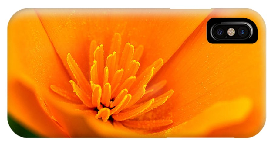 Poppies IPhone X Case featuring the photograph California Poppy by Daniel Ryan
