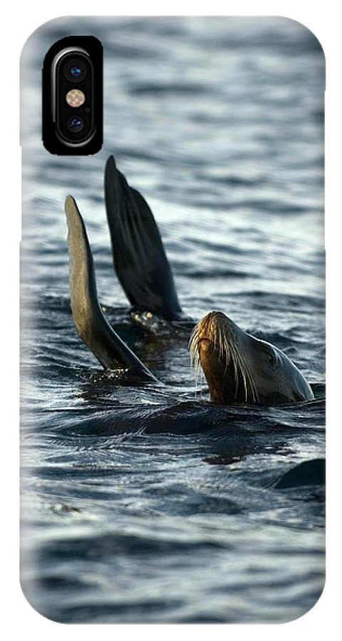 California Sea Lion IPhone X Case featuring the photograph California Sea Lion by Christopher Swann/science Photo Library