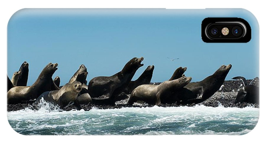 California Sea Lion IPhone X Case featuring the photograph California Sea Lions by Christopher Swann