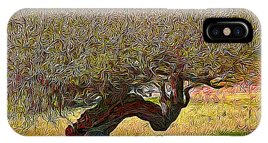 Jim Pavelle Fine Art IPhone X Case featuring the photograph California Summer Oak by Jim Pavelle