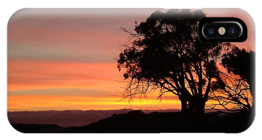 Tree IPhone X Case featuring the photograph California Tree At Sunset by Susan Wyman