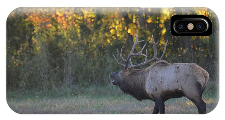 Bull Elk IPhone X Case featuring the photograph Call Of Love by Deanna Cagle