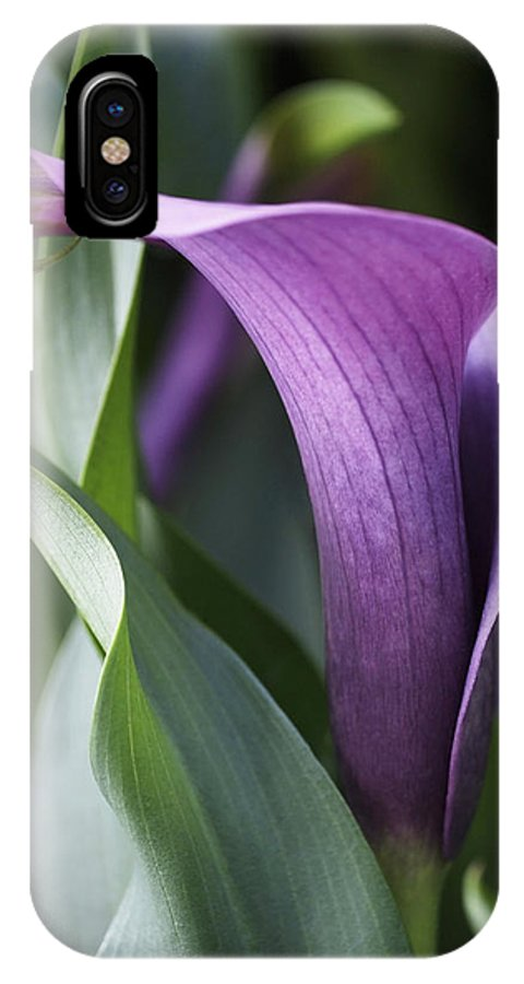 Lily IPhone X Case featuring the photograph Calla Lily in Purple Ombre by Rona Black