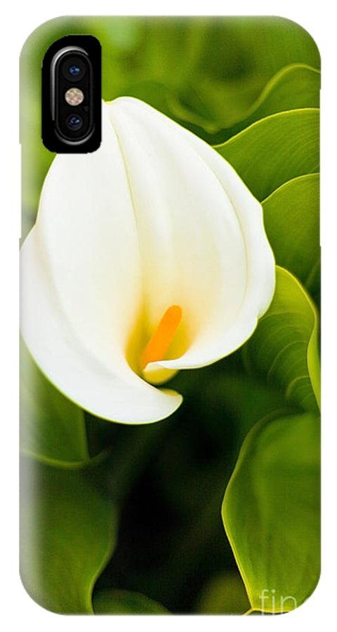 Calla Lily IPhone X Case featuring the photograph Calla Lily Plant by Richard J Thompson
