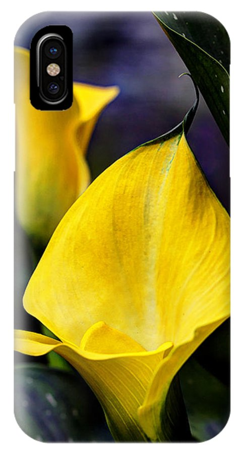 Calla IPhone X Case featuring the photograph Calla Lily Portrait In Yellow And Green by Mother Nature