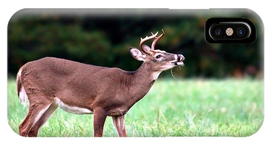 Deer IPhone X Case featuring the photograph Calling Buck by Mary Almond