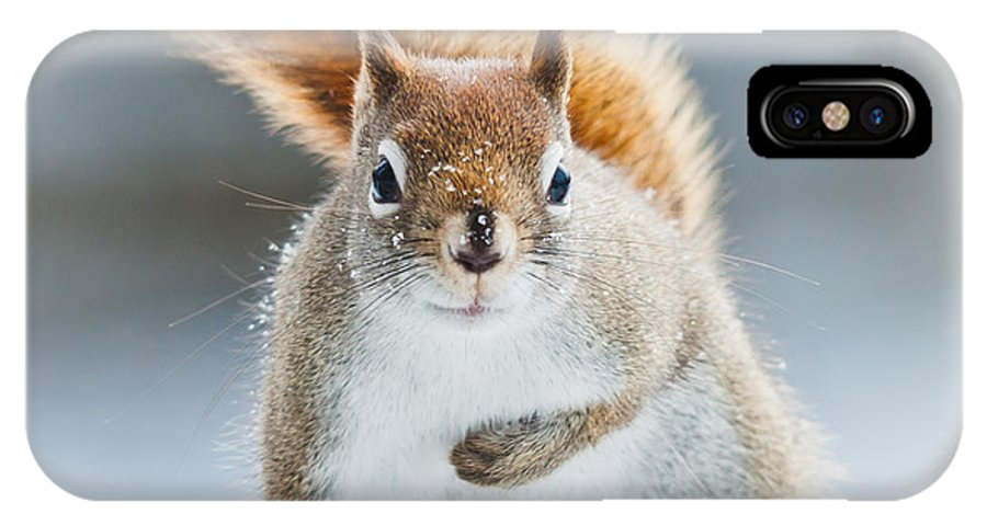 Squirrel IPhone X Case featuring the photograph Can I Have Some More? by Cheryl Baxter