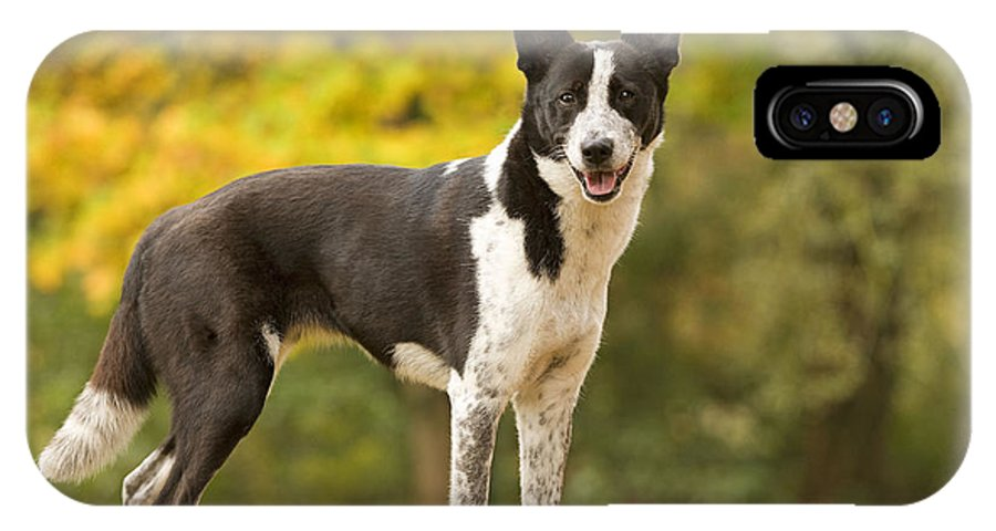 Canaan Dog IPhone X / XS Case featuring the photograph Canaan Dog by Jean-Michel Labat