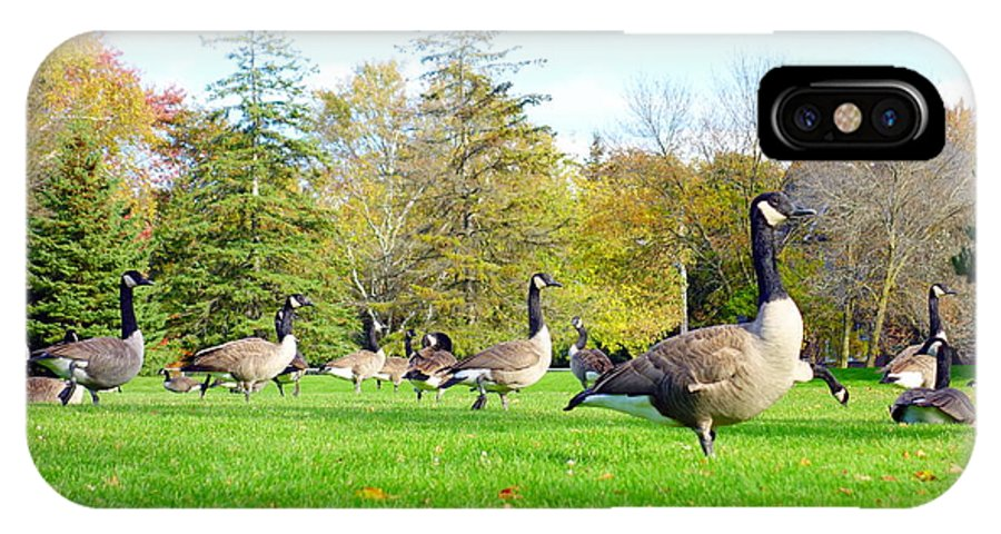 Canadian IPhone X Case featuring the photograph Canada Geese by Valentino Visentini