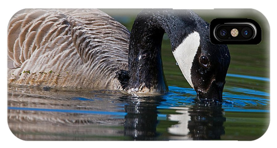 Animal IPhone X Case featuring the photograph Canada Goose by Randall Ingalls