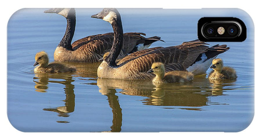 Animal IPhone X Case featuring the photograph Canada Goose With Chicks by Tom Norring