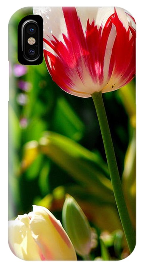 Tulip IPhone X Case featuring the photograph Candy Cane Tulip by Jeff Lowe