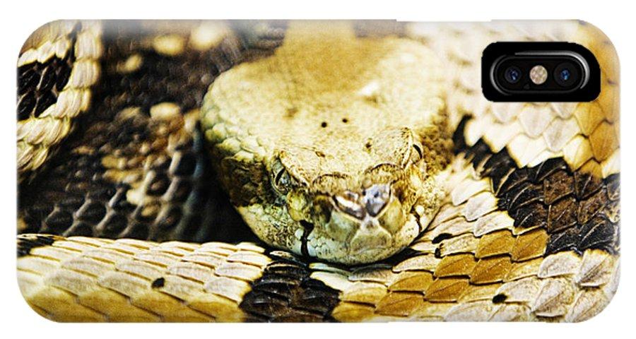 Rattlesnake IPhone X Case featuring the photograph Canebrake by Scott Pellegrin
