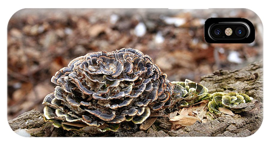Fungi IPhone X Case featuring the photograph Cardboard Rose by Gerald Goldschein