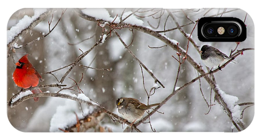 Red IPhone X Case featuring the photograph Cardinal Meeting In The Snow by Betsy Knapp