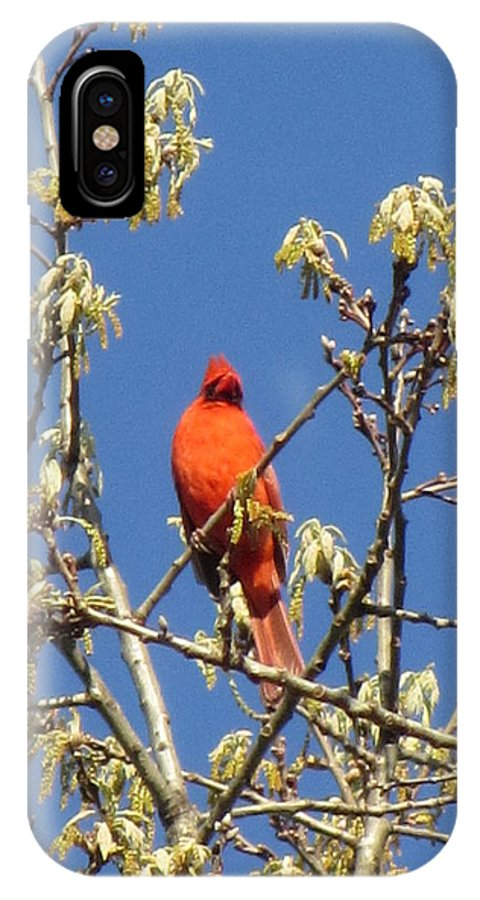 Bird IPhone X / XS Case featuring the photograph Cardinal Red by Deborah Flusberg